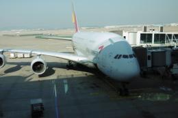 flyingmasさんが、仁川国際空港で撮影したアシアナ航空 A380-841の航空フォト(飛行機 写真・画像)