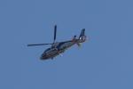 小型機専門家さんが、高知空港で撮影したオールニッポンヘリコプター AS365N2 Dauphin 2の航空フォト(飛行機 写真・画像)