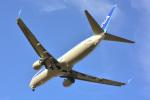 パンダさんが、成田国際空港で撮影した全日空 737-8ALの航空フォト(飛行機 写真・画像)