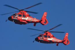 スカルショットさんが、東京臨海広域防災公園ヘリポートで撮影した東京消防庁航空隊 AS365N2 Dauphin 2の航空フォト(飛行機 写真・画像)