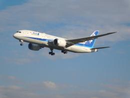 さんまるエアラインさんが、成田国際空港で撮影した全日空 787-8 Dreamlinerの航空フォト(飛行機 写真・画像)
