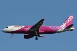 camelliaさんが、成田国際空港で撮影したピーチ A320-214の航空フォト(飛行機 写真・画像)