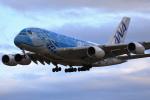 take_2014さんが、成田国際空港で撮影した全日空 A380-841の航空フォト(飛行機 写真・画像)