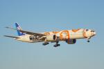 ちゃぽんさんが、成田国際空港で撮影した全日空 777-381/ERの航空フォト(飛行機 写真・画像)
