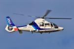 Airway-japanさんが、函館空港で撮影したオールニッポンヘリコプター AS365N3 Dauphin 2の航空フォト(飛行機 写真・画像)
