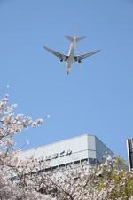 turt@かめちゃんさんが、伊丹空港で撮影した日本航空 777-246の航空フォト(写真)