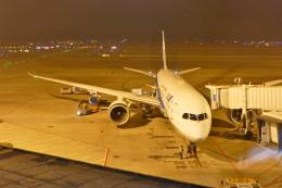 KKiSMさんが、上海浦東国際空港で撮影した全日空 787-8 Dreamlinerの航空フォト(飛行機 写真・画像)