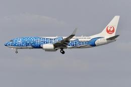 Suzukenさんが、那覇空港で撮影した日本トランスオーシャン航空 737-8Q3の航空フォト(飛行機 写真・画像)