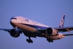 torukutune203さんが、成田国際空港で撮影した全日空 777-381/ERの航空フォト(飛行機 写真・画像)
