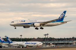 こうきさんが、成田国際空港で撮影した全日空 787-8 Dreamlinerの航空フォト(飛行機 写真・画像)