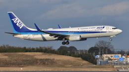 saoya_saodakeさんが、成田国際空港で撮影した全日空 737-881の航空フォト(飛行機 写真・画像)