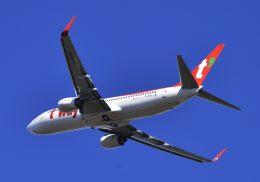takatakaさんが、成田国際空港で撮影したティーウェイ航空 737-8Q8の航空フォト(飛行機 写真・画像)