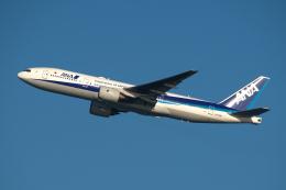 りおんさんが、羽田空港で撮影した全日空 777-281の航空フォト(飛行機 写真・画像)