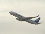 commet7575さんが、関西国際空港で撮影した全日空 737-881の航空フォト(飛行機 写真・画像)