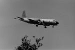 ヒロリンさんが、厚木飛行場で撮影した海上自衛隊 P-3Cの航空フォト(飛行機 写真・画像)