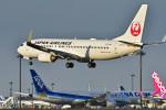 パンダさんが、成田国際空港で撮影した日本航空 737-846の航空フォト(飛行機 写真・画像)