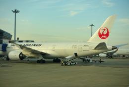 mojioさんが、中部国際空港で撮影した日本航空 787-8 Dreamlinerの航空フォト(飛行機 写真・画像)