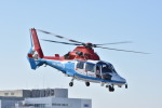 蒼い鳩さんが、東京ヘリポートで撮影した川崎市消防航空隊 AS365N3 Dauphin 2の航空フォト(飛行機 写真・画像)