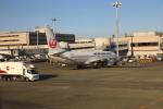 Love Airbus350さんが、羽田空港で撮影した日本航空 737-846の航空フォト(飛行機 写真・画像)