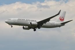 雪虫さんが、新千歳空港で撮影した日本航空 737-846の航空フォト(飛行機 写真・画像)