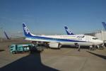 美月推しさんが、羽田空港で撮影した全日空 737-881の航空フォト(飛行機 写真・画像)