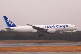 やつはしさんが、成田国際空港で撮影した全日空 777-F81の航空フォト(飛行機 写真・画像)