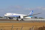 ちゃぽんさんが、伊丹空港で撮影した全日空 787-8 Dreamlinerの航空フォト(飛行機 写真・画像)
