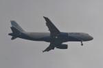 kuro2059さんが、ノイバイ国際空港で撮影したインディゴ A320-232の航空フォト(飛行機 写真・画像)