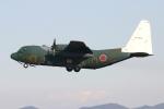 KAKOさんが、名古屋飛行場で撮影した航空自衛隊 C-130H Herculesの航空フォト(飛行機 写真・画像)
