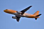we love kixさんが、関西国際空港で撮影したスクート A320-232の航空フォト(飛行機 写真・画像)