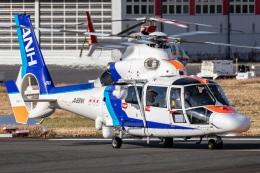 まんぼ しりうすさんが、東京ヘリポートで撮影したオールニッポンヘリコプター AS365N3 Dauphin 2の航空フォト(飛行機 写真・画像)