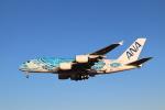 kenzy201さんが、成田国際空港で撮影した全日空 A380-841の航空フォト(飛行機 写真・画像)