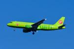 Frankspotterさんが、成田国際空港で撮影したS7航空 A320-214の航空フォト(飛行機 写真・画像)