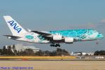 Chofu Spotter Ariaさんが、成田国際空港で撮影した全日空 A380-841の航空フォト(飛行機 写真・画像)