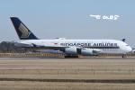 tassさんが、成田国際空港で撮影したシンガポール航空 A380-841の航空フォト(飛行機 写真・画像)