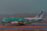こうきさんが、成田国際空港で撮影した全日空 A380-841の航空フォト(飛行機 写真・画像)