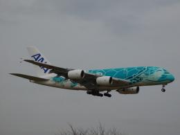 さんまるエアラインさんが、成田国際空港で撮影した全日空 A380-841の航空フォト(飛行機 写真・画像)