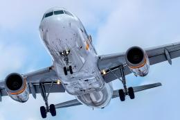 K.Sさんが、函館空港で撮影したタイガーエア台湾 A320-232の航空フォト(飛行機 写真・画像)