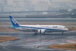 はやたいさんが、羽田空港で撮影した全日空 787-8 Dreamlinerの航空フォト(飛行機 写真・画像)