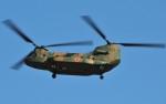 M.Ochiaiさんが、新田原基地で撮影した陸上自衛隊 CH-47JAの航空フォト(飛行機 写真・画像)