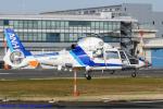 Chofu Spotter Ariaさんが、東京ヘリポートで撮影したオールニッポンヘリコプター AS365N2 Dauphin 2の航空フォト(飛行機 写真・画像)