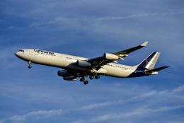 Frankspotterさんが、フランクフルト国際空港で撮影したルフトハンザドイツ航空 A340-313Xの航空フォト(飛行機 写真・画像)