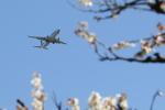 イソロクガトブさんが、富山空港で撮影した全日空 737-8ALの航空フォト(飛行機 写真・画像)