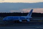 どんちんさんが、成田国際空港で撮影した全日空 A380-841の航空フォト(飛行機 写真・画像)