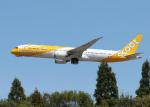 銀苺さんが、成田国際空港で撮影したスクート 787-9の航空フォト(飛行機 写真・画像)