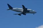 Dream2016さんが、中部国際空港で撮影したボーイング 747-409(LCF) Dreamlifterの航空フォト(飛行機 写真・画像)