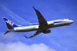とらとらさんが、伊丹空港で撮影した全日空 737-881の航空フォト(飛行機 写真・画像)