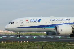 ceskykrumlovさんが、台北松山空港で撮影した全日空 787-8 Dreamlinerの航空フォト(飛行機 写真・画像)