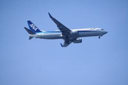 senbaさんが、羽田空港で撮影した全日空 737-881の航空フォト(飛行機 写真・画像)