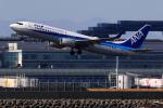 こだしさんが、羽田空港で撮影した全日空 737-881の航空フォト(飛行機 写真・画像)